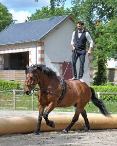 Comment choisir une bride pour votre cheval